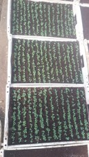 legumicultor-salaprd-cs-2