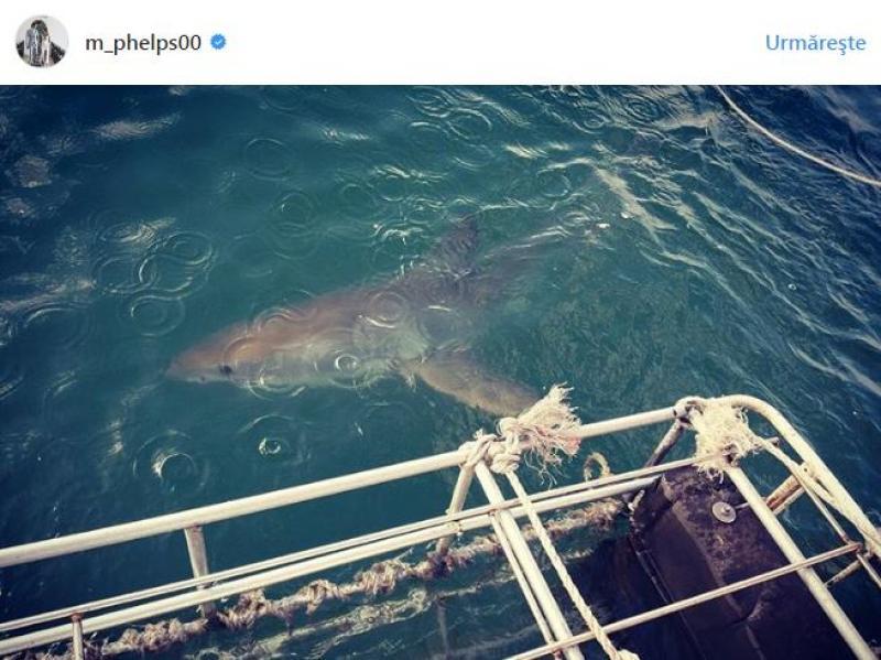 rechin-phelps